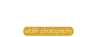 Sarel van Zyl Wildlife Photography